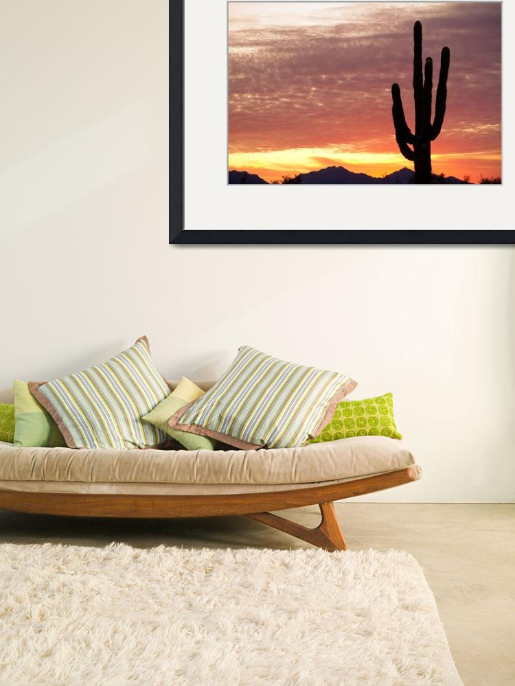 """Arizona Saguaro Sunrise&quot  (2011) by lightningman"