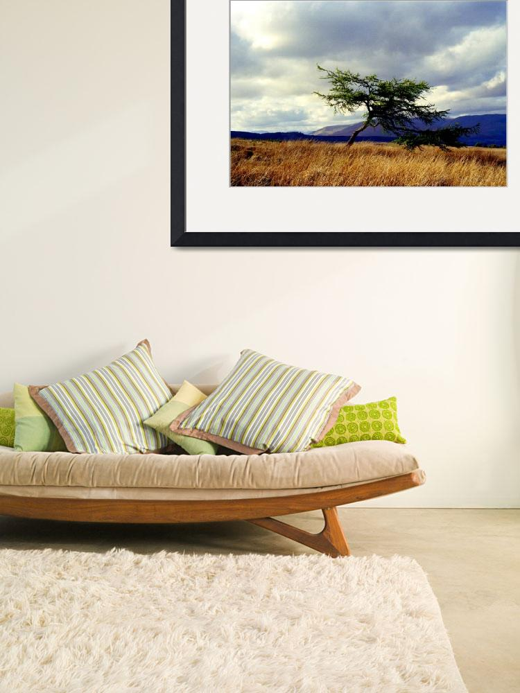 """Tree Overlooking Loch Lomond&quot  (2007) by MichelleLambert"