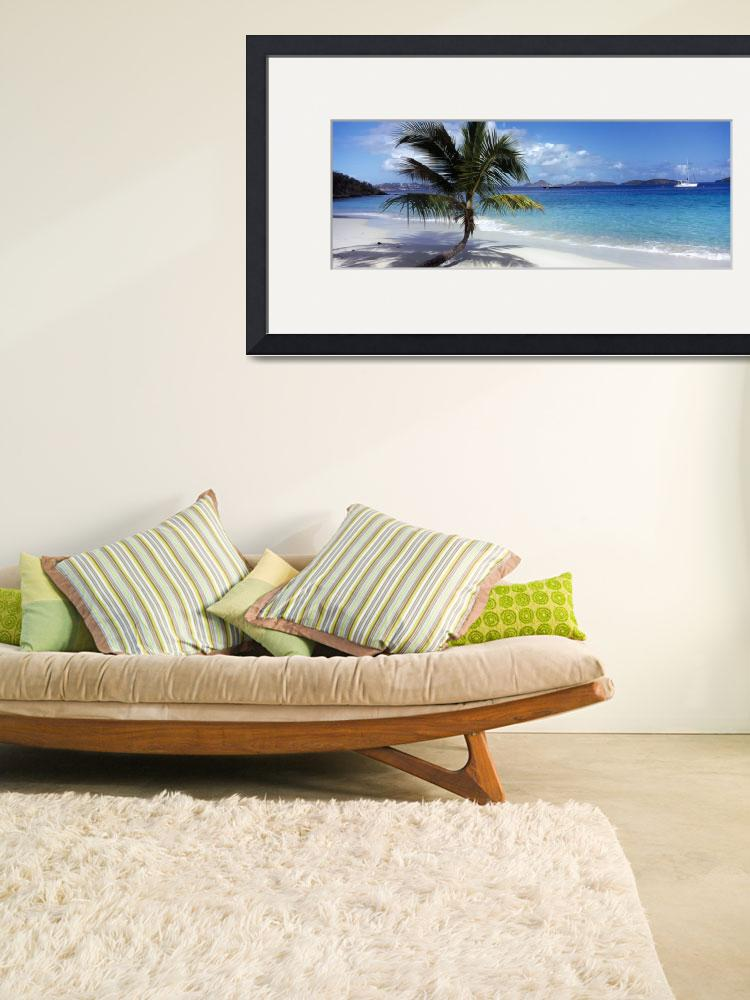 """Palm tree on the beach&quot  by Panoramic_Images"