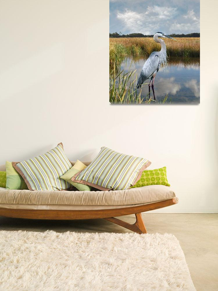 """Great Blue Heron at Brooker Creek&quot  (2015) by spadecaller"