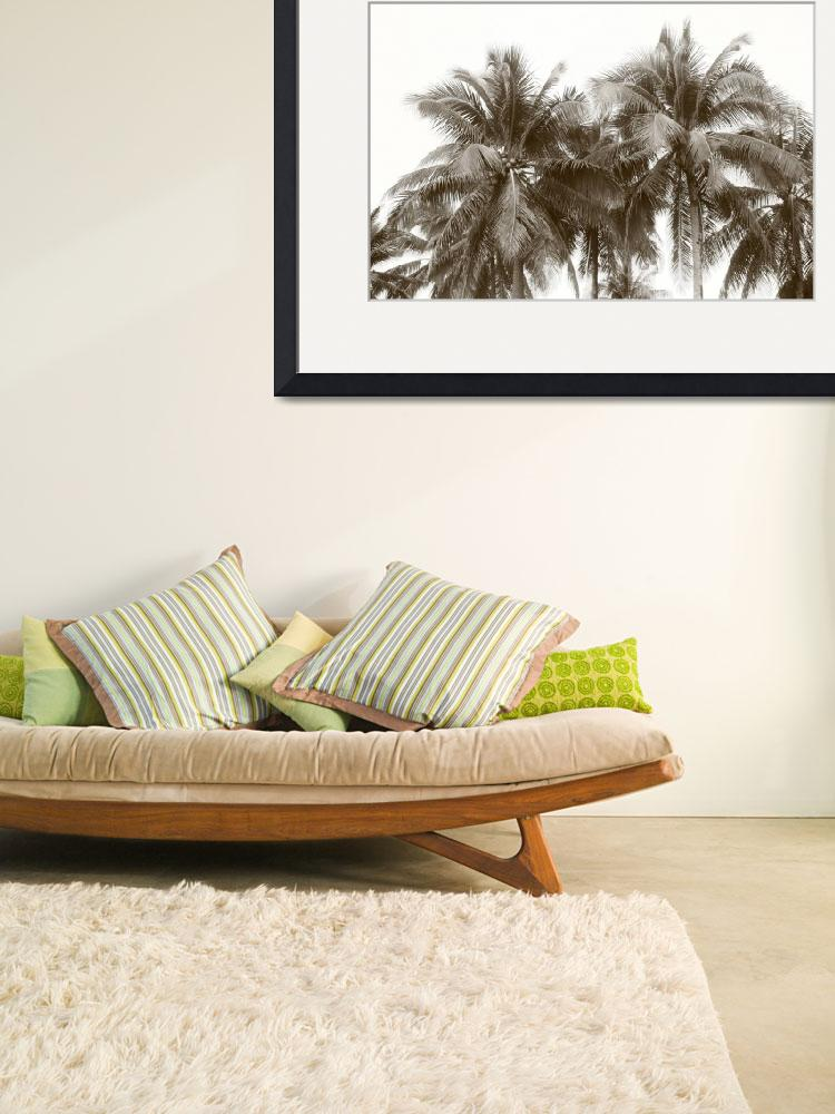 """Tropic Coconut tree, monochrome Singapore&quot  by sghomedeco"