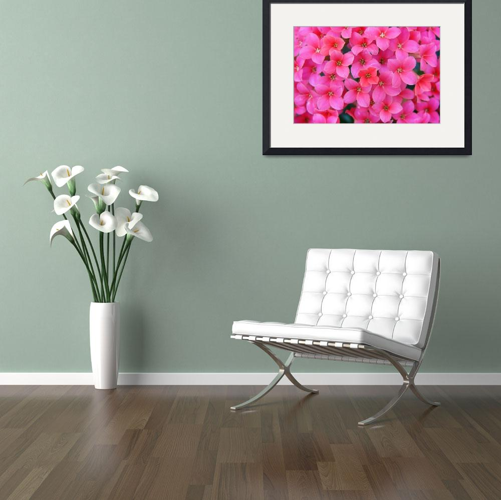 """Divine Pink Flower Stretched Canvas Prints&quot  (2013) by onenesspixels"
