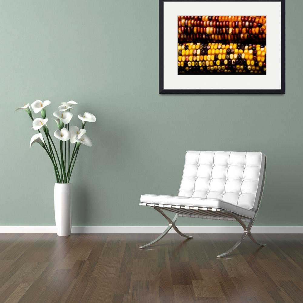 """Colorful Corn - Fine Art Photography Print&quot  (2009) by lightningman"