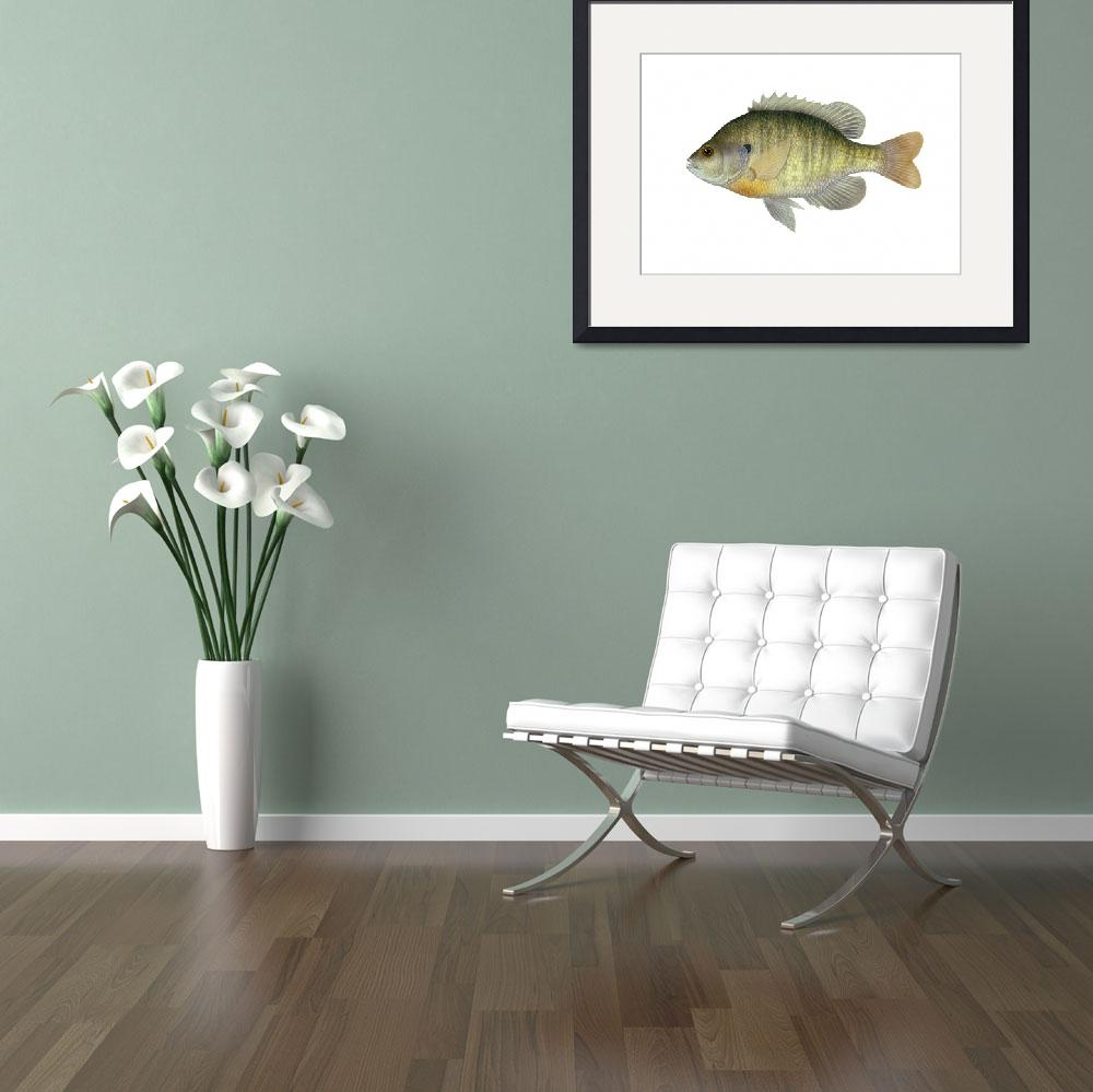 """Illustration of a bluegill, freshwater fish&quot  by stocktrekimages"
