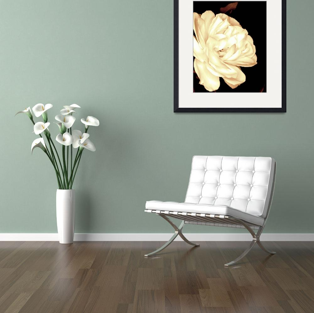 """White Rose in a Sepia tone&quot  by Linde"