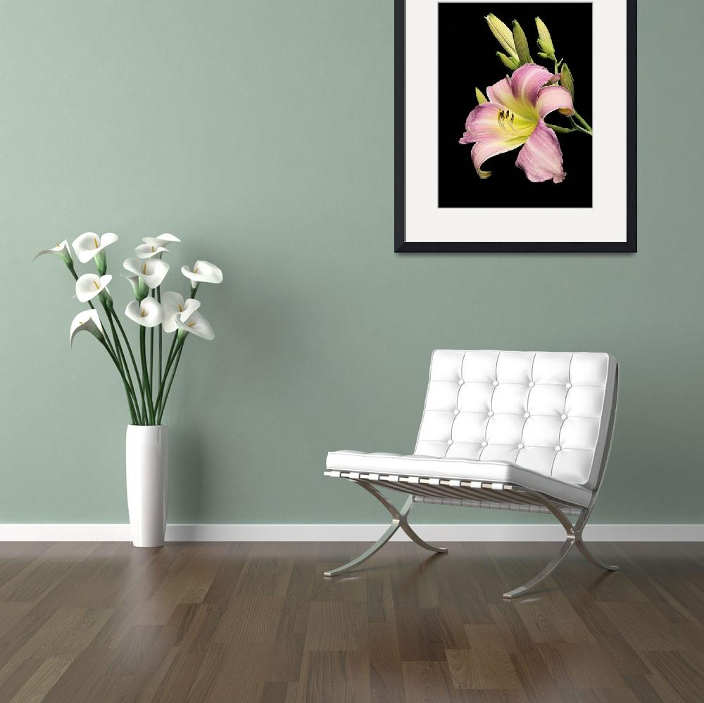 """Day Lily i2&quot  by KSDesigns"