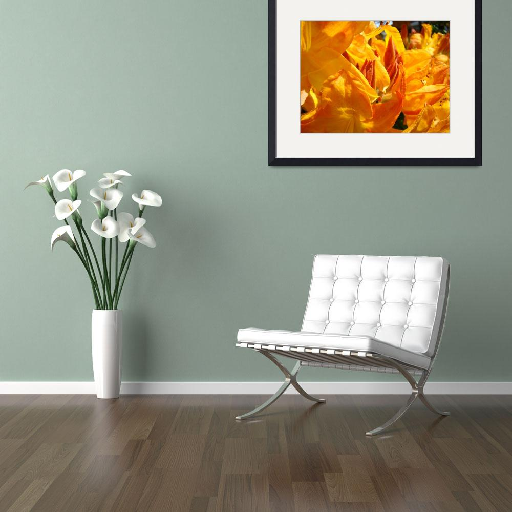 """Nature Fine Art Photography Prints Rhodies&quot  (2011) by BasleeTroutman"