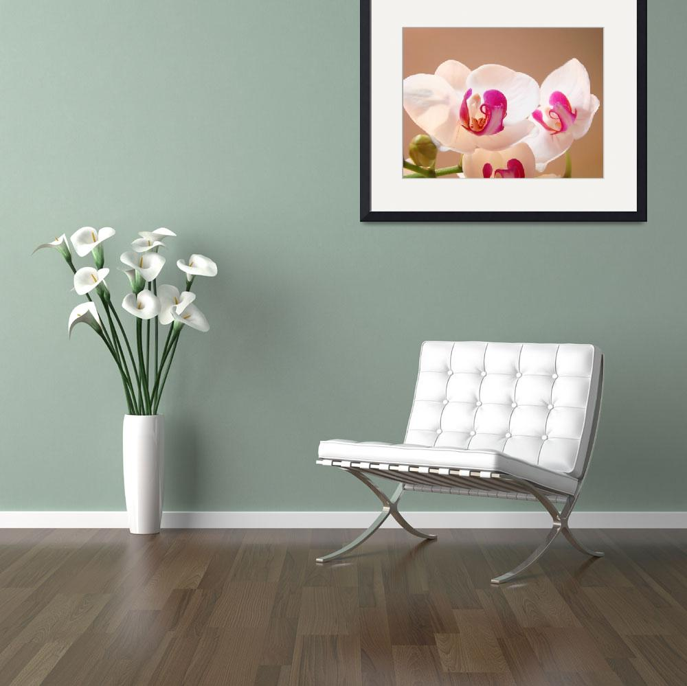 """Orchids Flowers art prints Floral Botanical&quot  (2013) by BasleeTroutman"