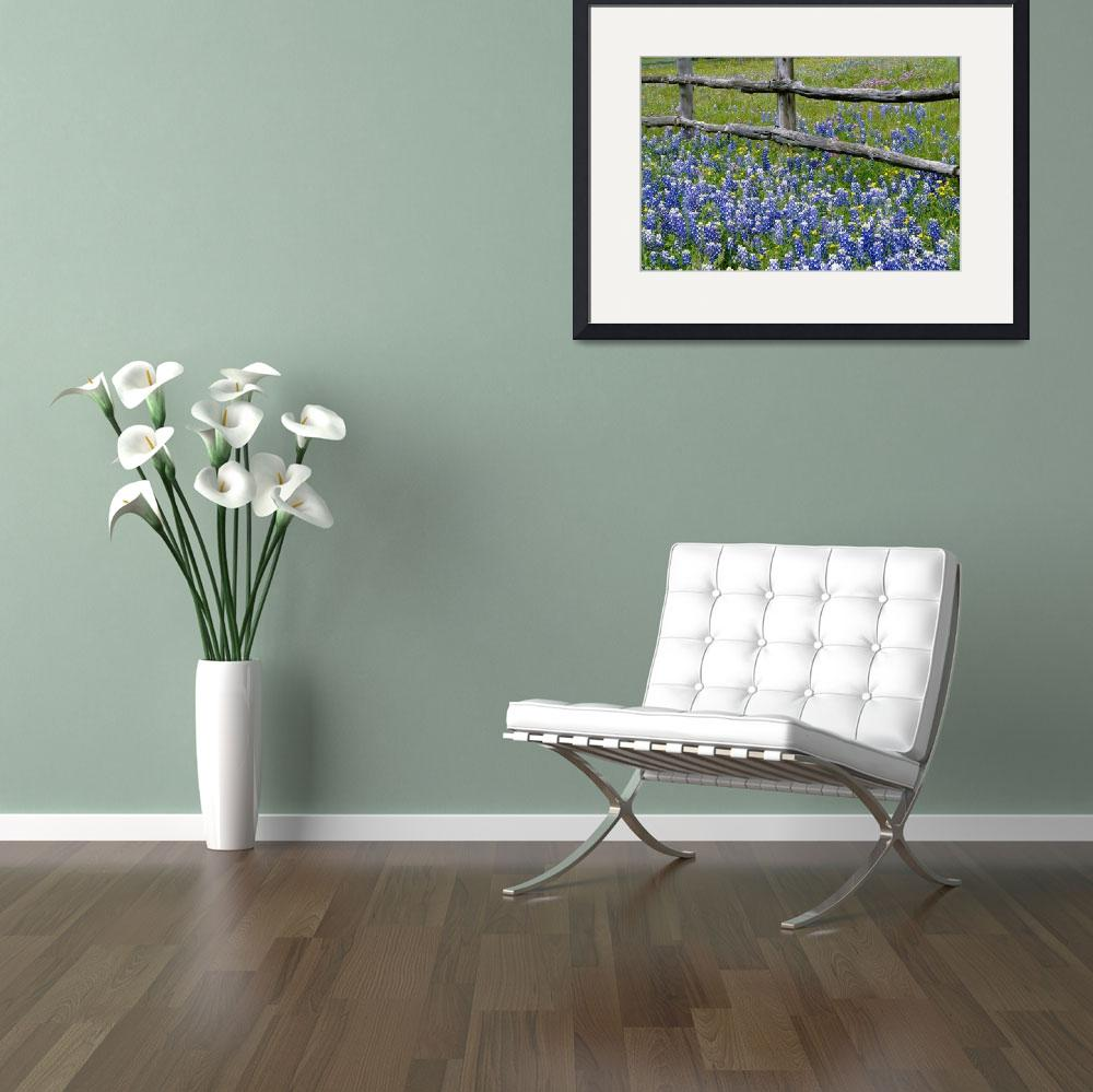 """Bluebonnet flowers blooming around weathered wood&quot  by Panoramic_Images"