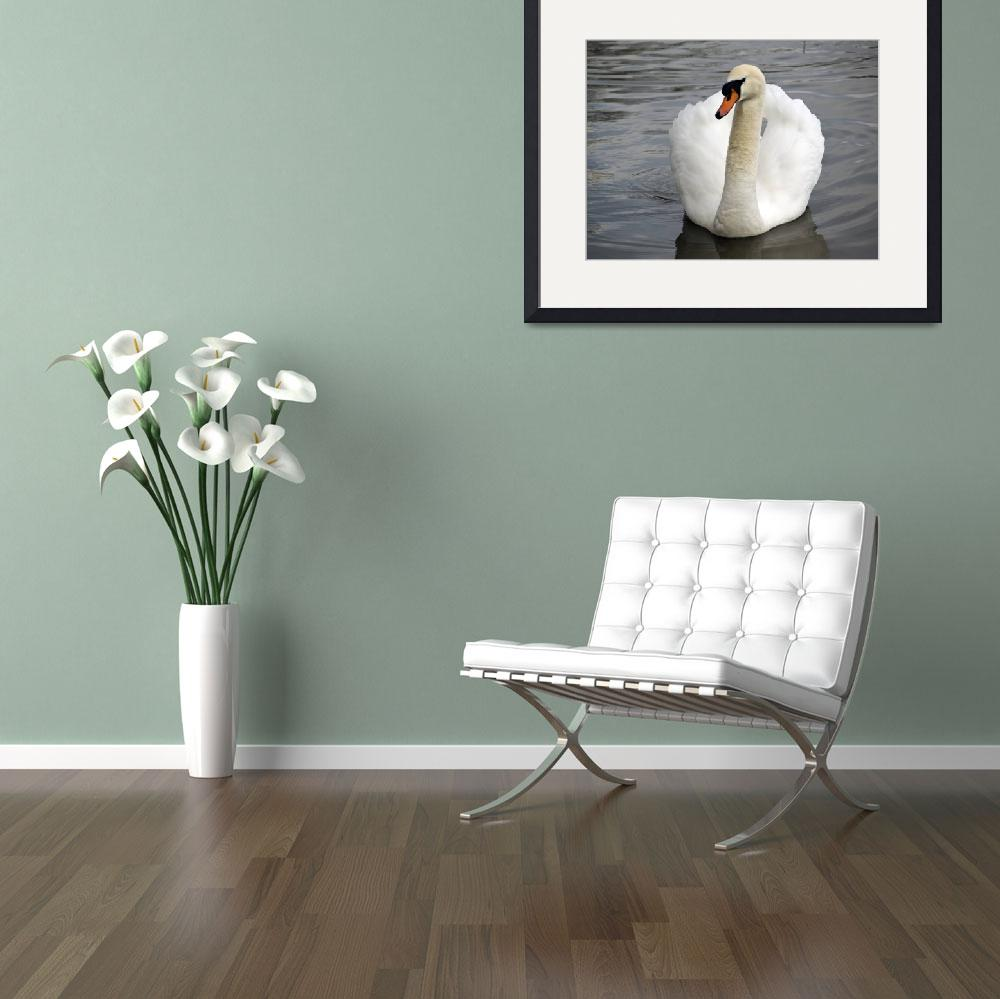 """Solitary Swan&quot  (2009) by ChrisAndrews"