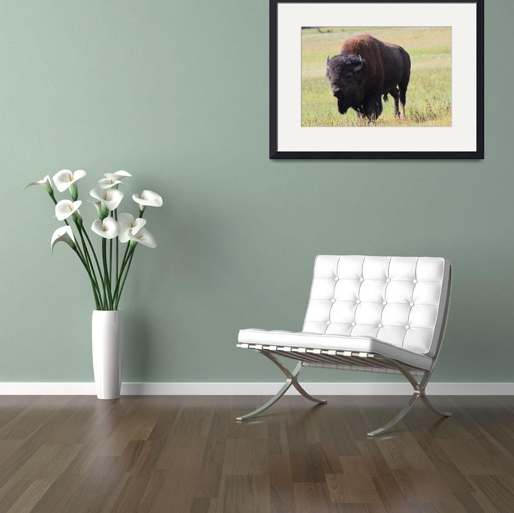 """Buffalo 2&quot  (2009) by karmaphotos"