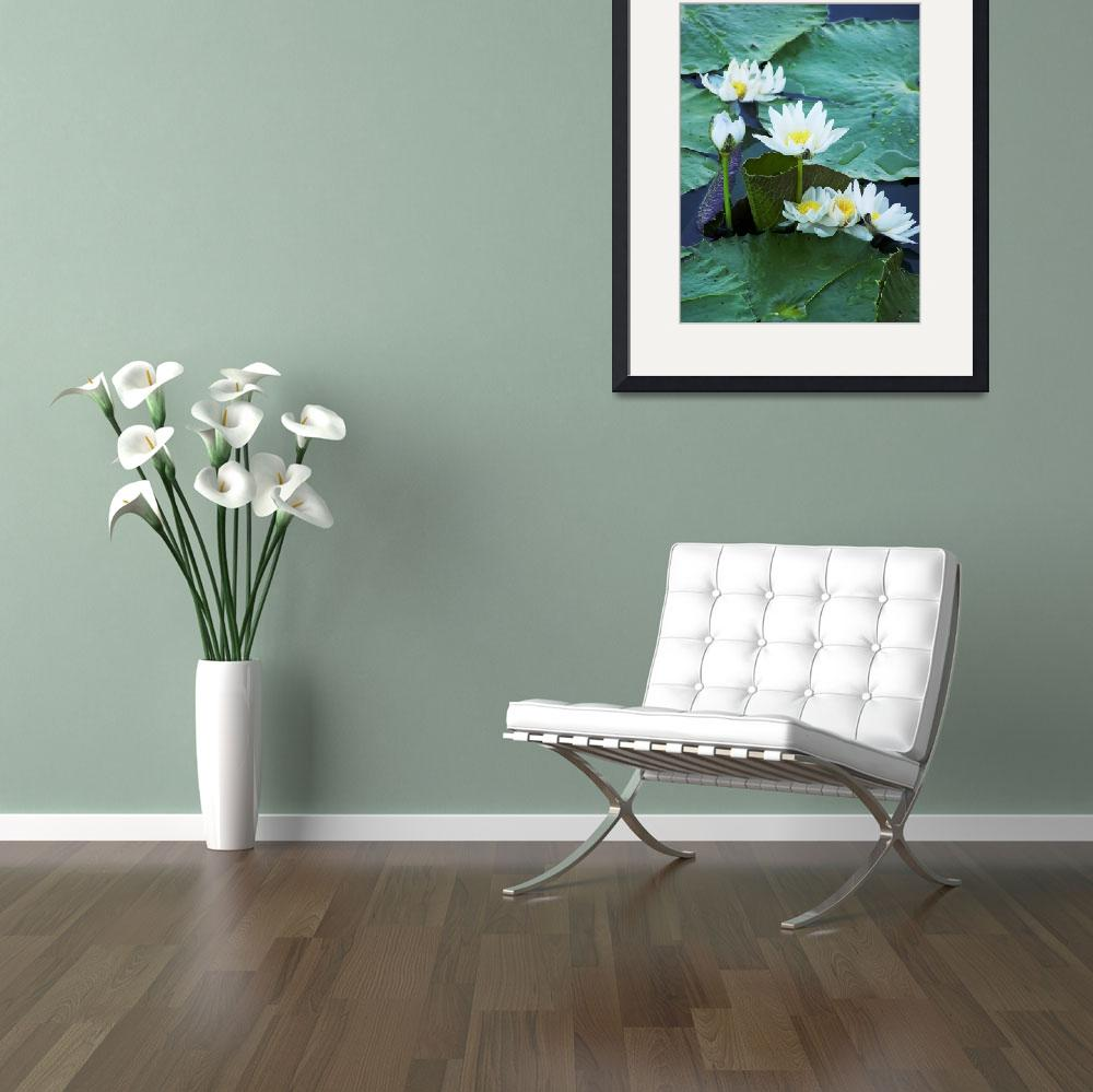 """Lillies - Small Group&quot  (2007) by taryneast"