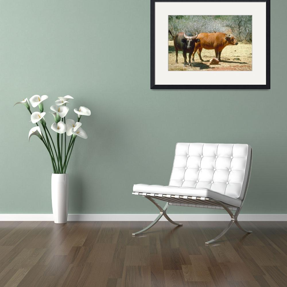 """Endangered Dwarf Forest Buffalo Pair&quot  by ArtLoversOnline"