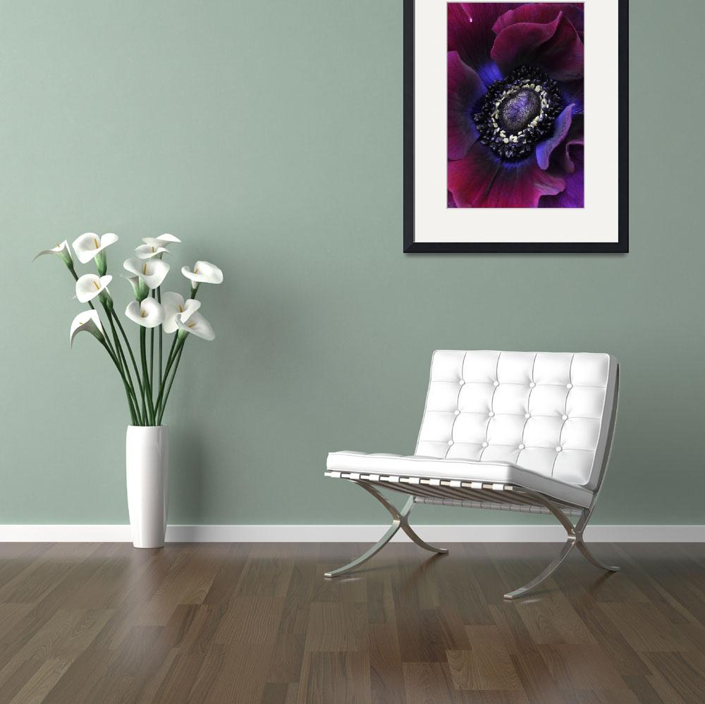 """Anemone 86&quot  (2012) by JulieScholz"