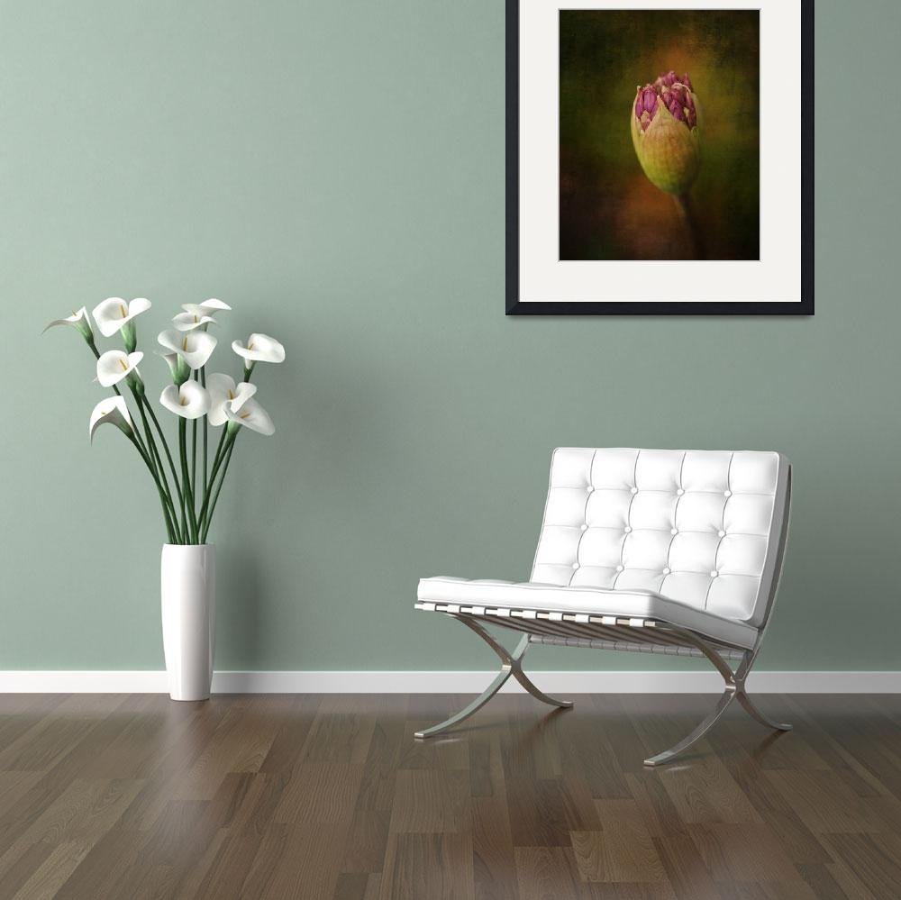 """Allium&quot  (2011) by CindyHPhotography"
