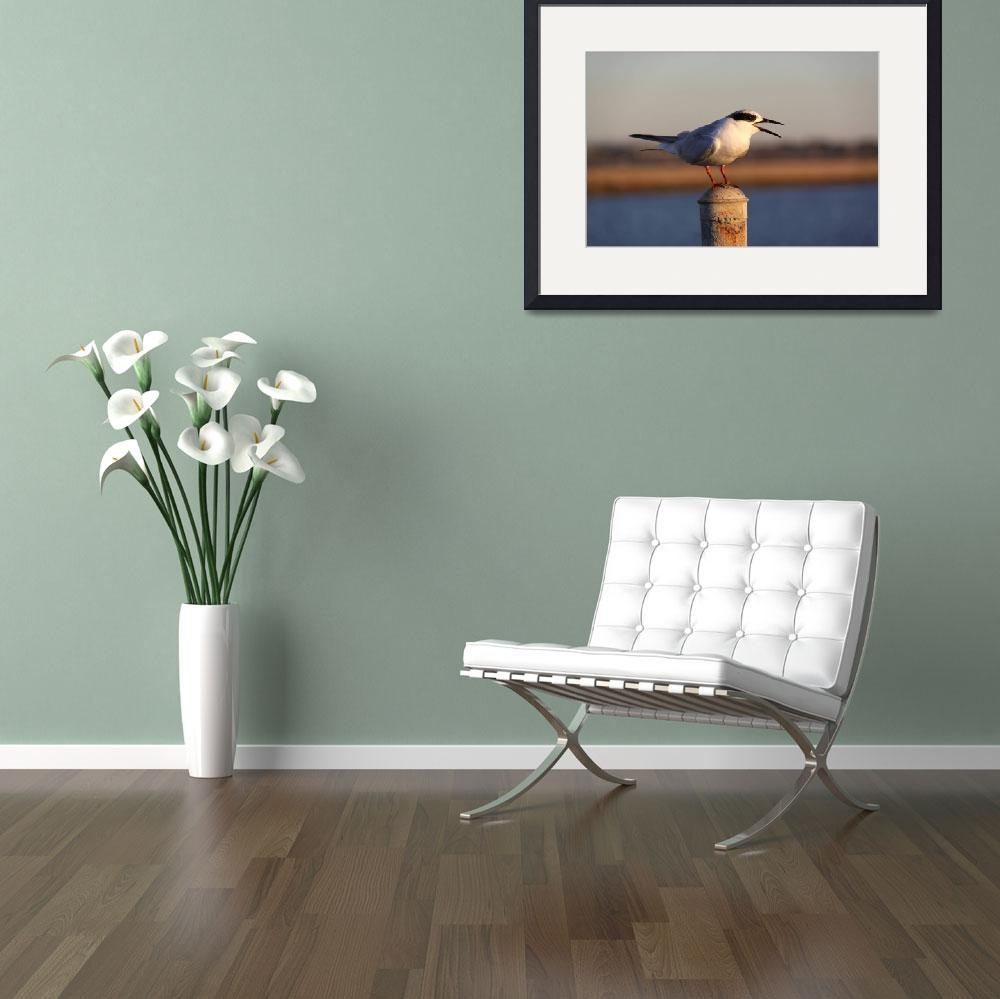 """Tern&quot  by DonBakerPhotography"