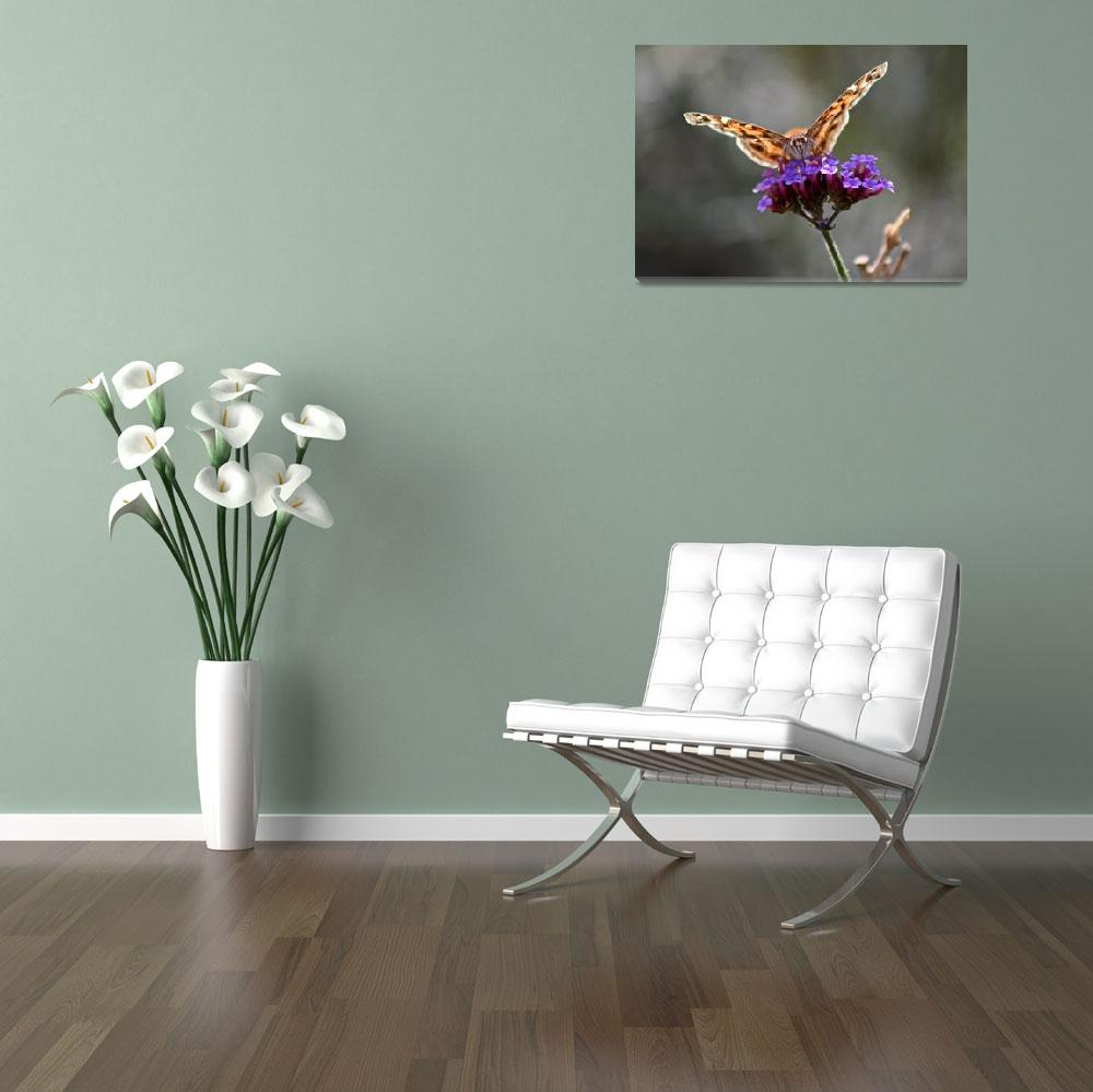 """Butterfly   American Lady with grey&quot  (2011) by KsWorldArt"