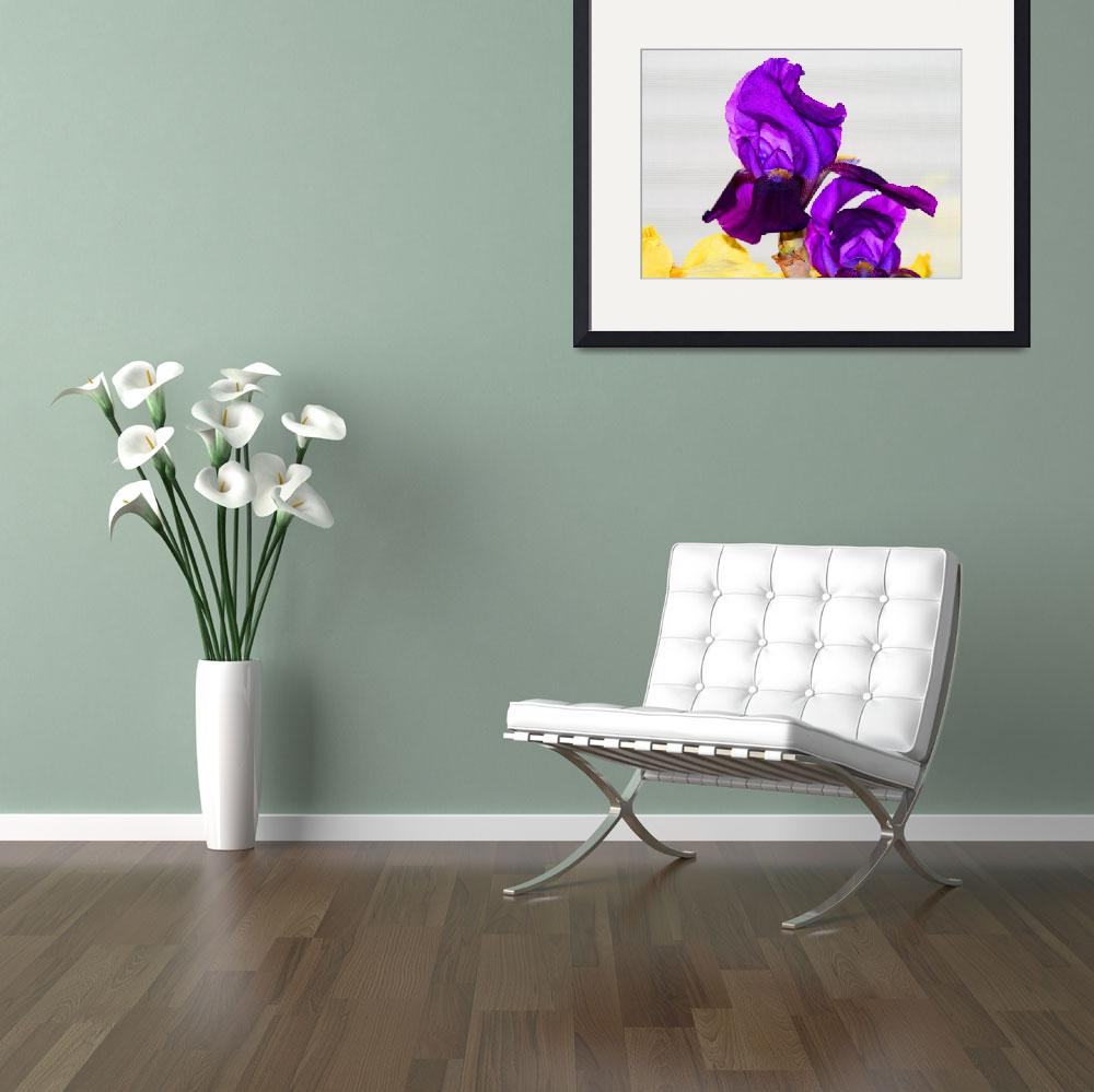 """Irises&quot  (2011) by KsWorldArt"