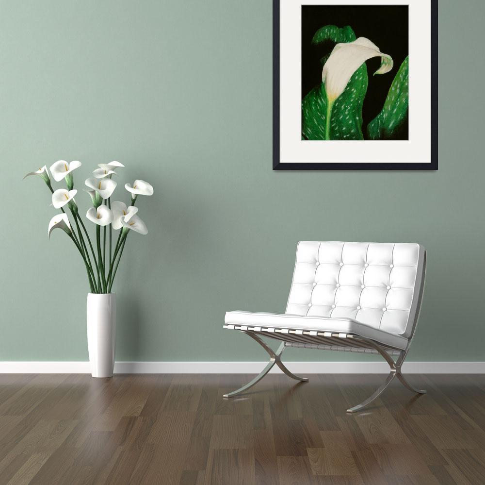 """Calla Lily&quot  (2005) by evansonart"