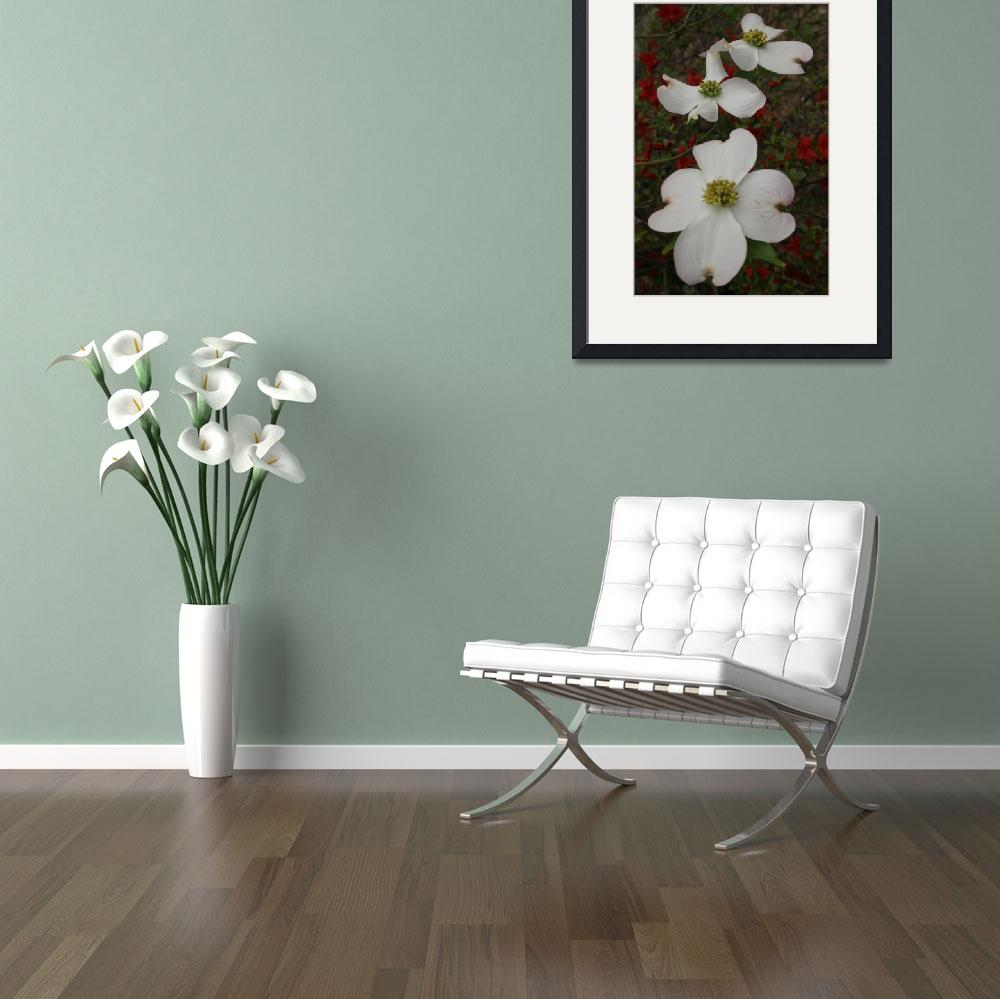 """3 Dogwood Blossoms - Vertical&quot  by Weingartner"