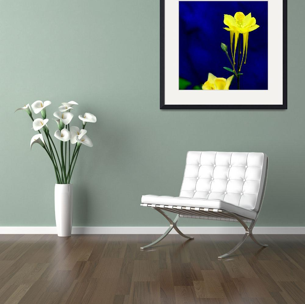 """Yellow Columbine w blue wall&quot  (2007) by Kirby"