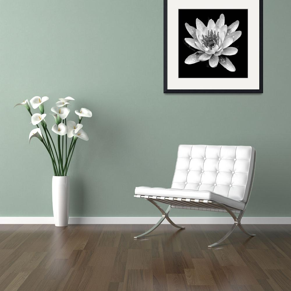 """Water Lily In Black And White&quot  (2009) by bavosiphotoart"