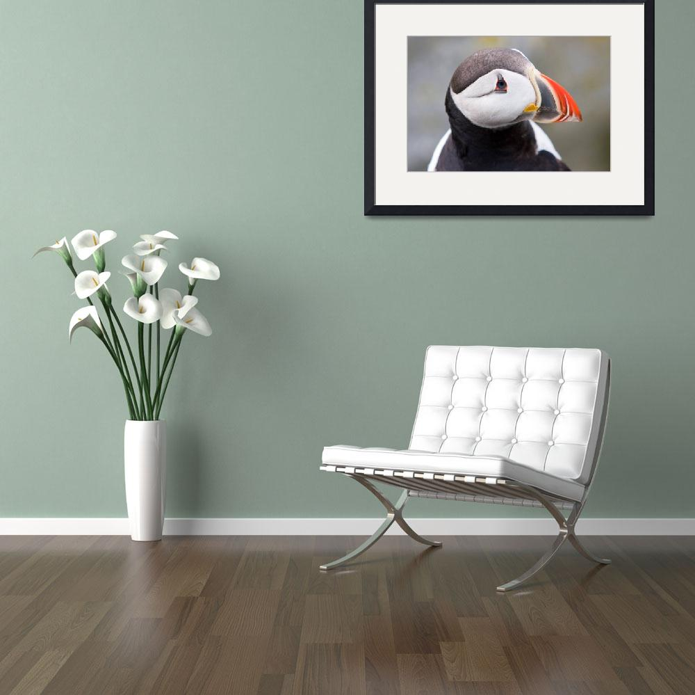 """Atlantic Puffins 2&quot  by cary"