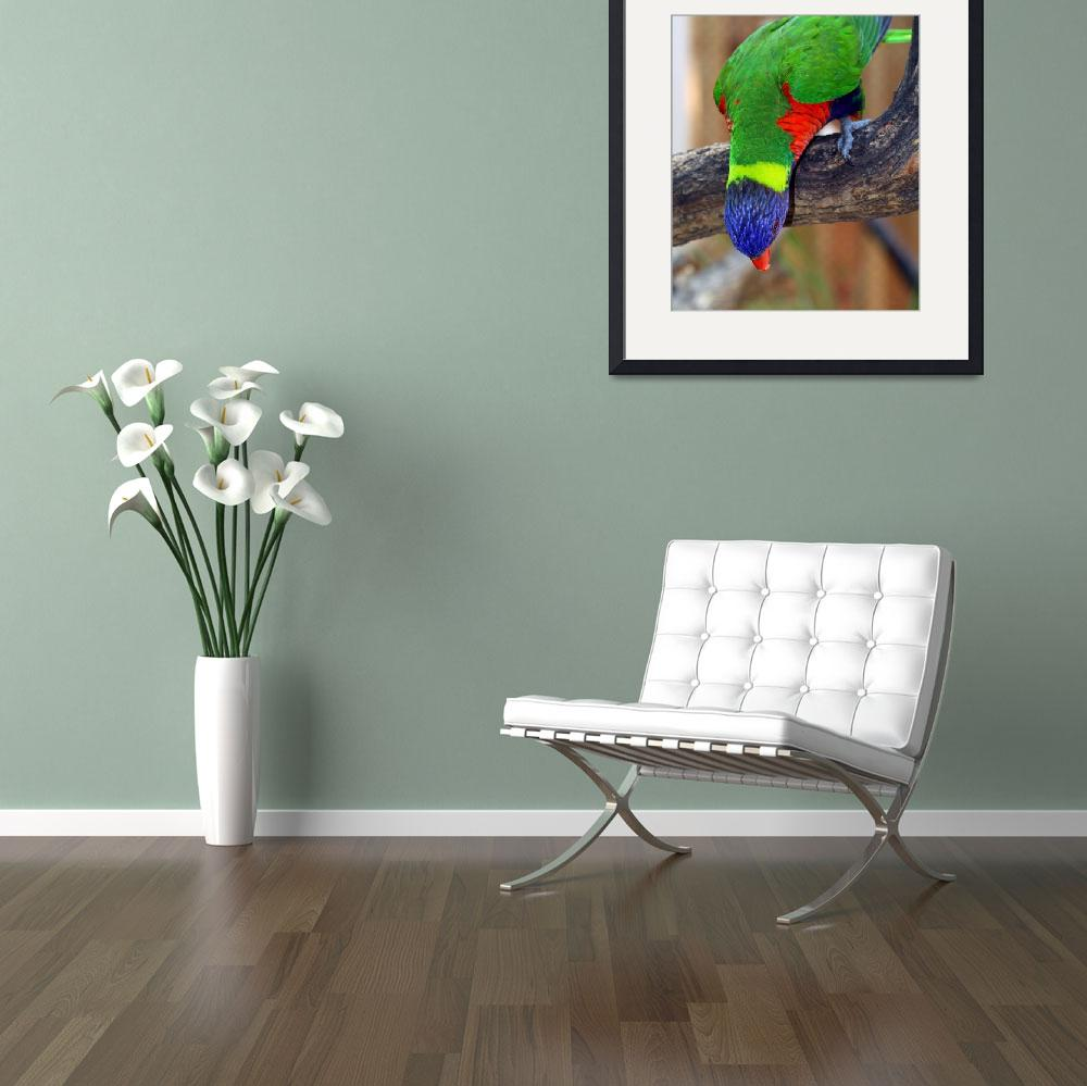 """Rainbow Lorikeet&quot  (2012) by inspirationalphotocreatio"