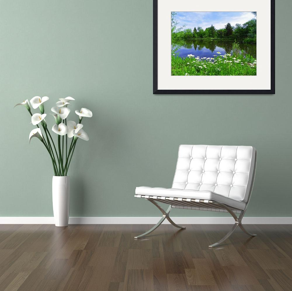 """Beauty Pond - Oxeye Daisy&quot  by artsandi"