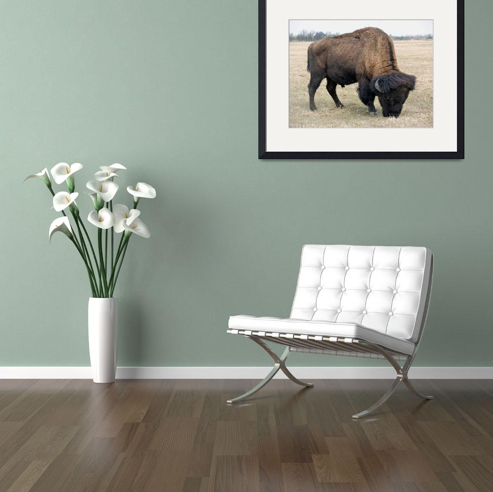 """American Bison Feeding&quot  (2012) by rhamm"