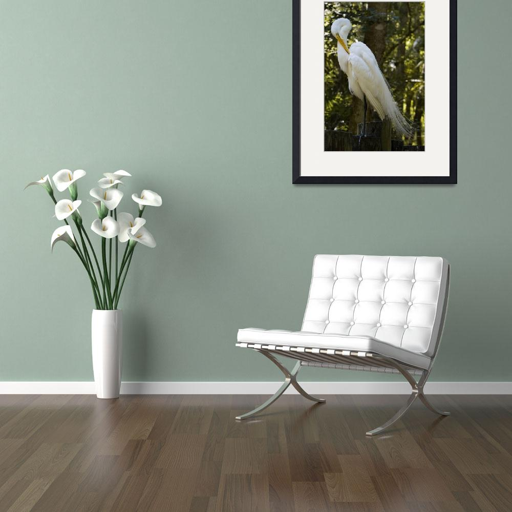 """Great Egret With Bend Head&quot  by GrandmaDee"