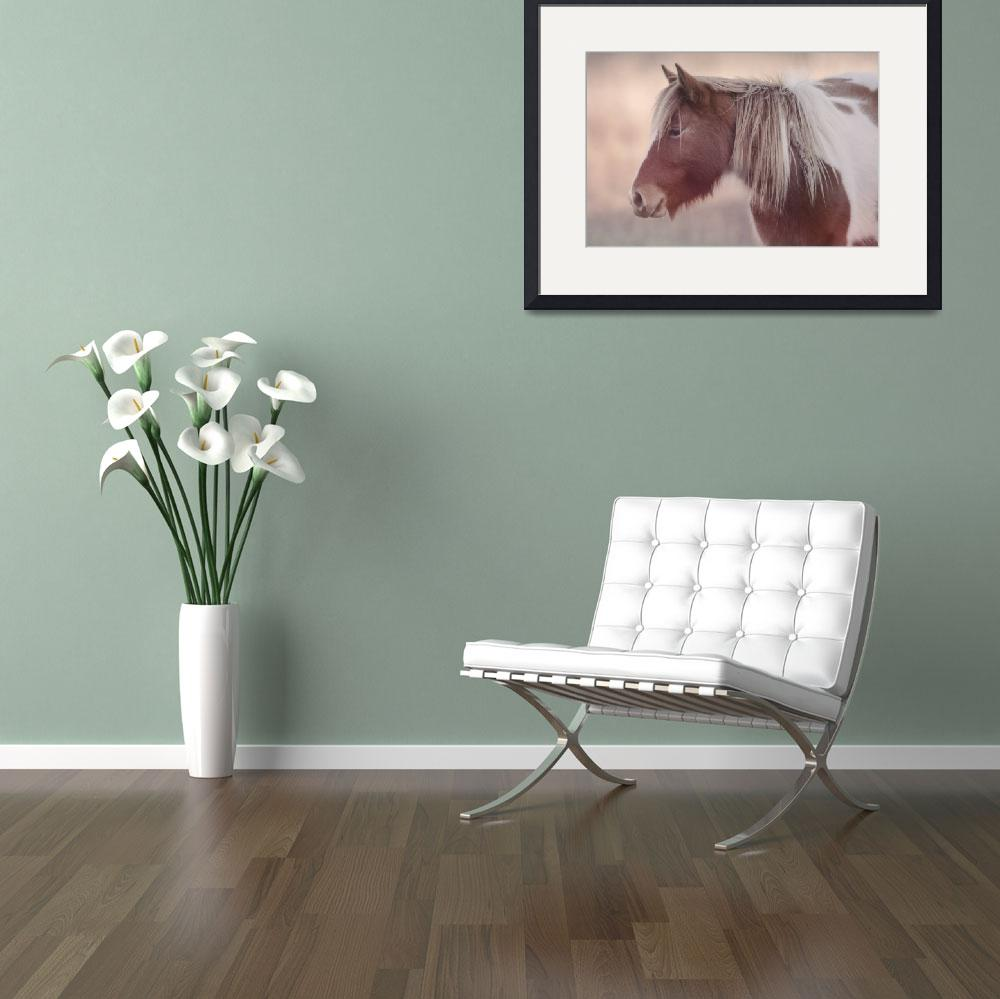 """Chincoteague Pony - Courtney"