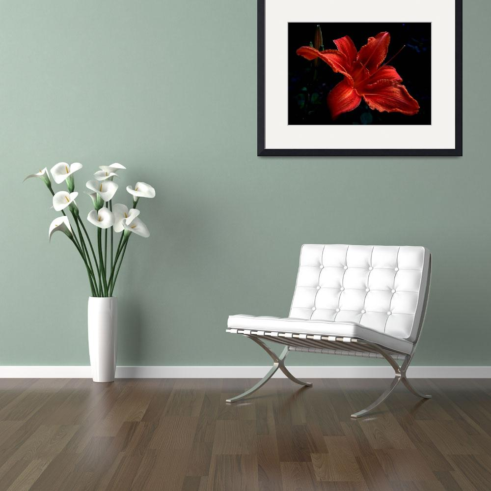"""Day-lily 1&quot  (2008) by bavosiphotoart"