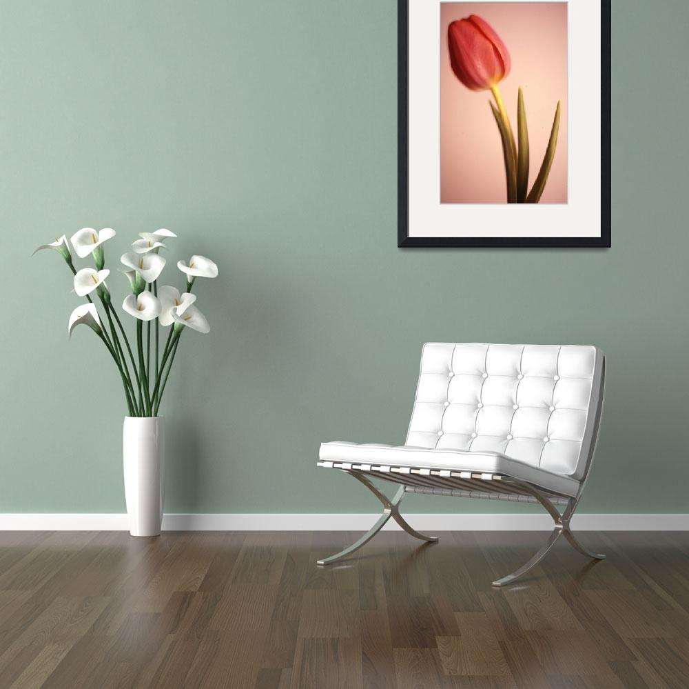 """Tulip 8&quot  by MTPhotography"
