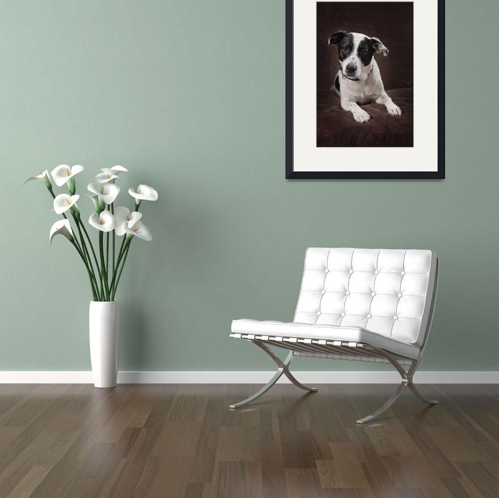 """Jack Russell Terrier On A Brown Studio Background&quot  by DesignPics"