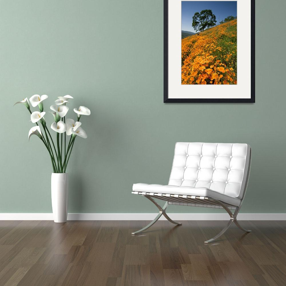"""California Poppy Hillside IV&quot  (2012) by SederquistPhotography"