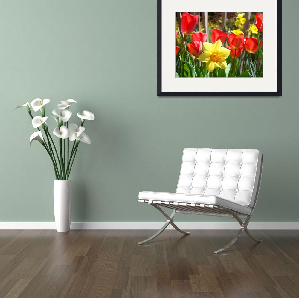 """Spring Daffodils Flowers art prints Red Tulips&quot  (2014) by BasleeTroutman"