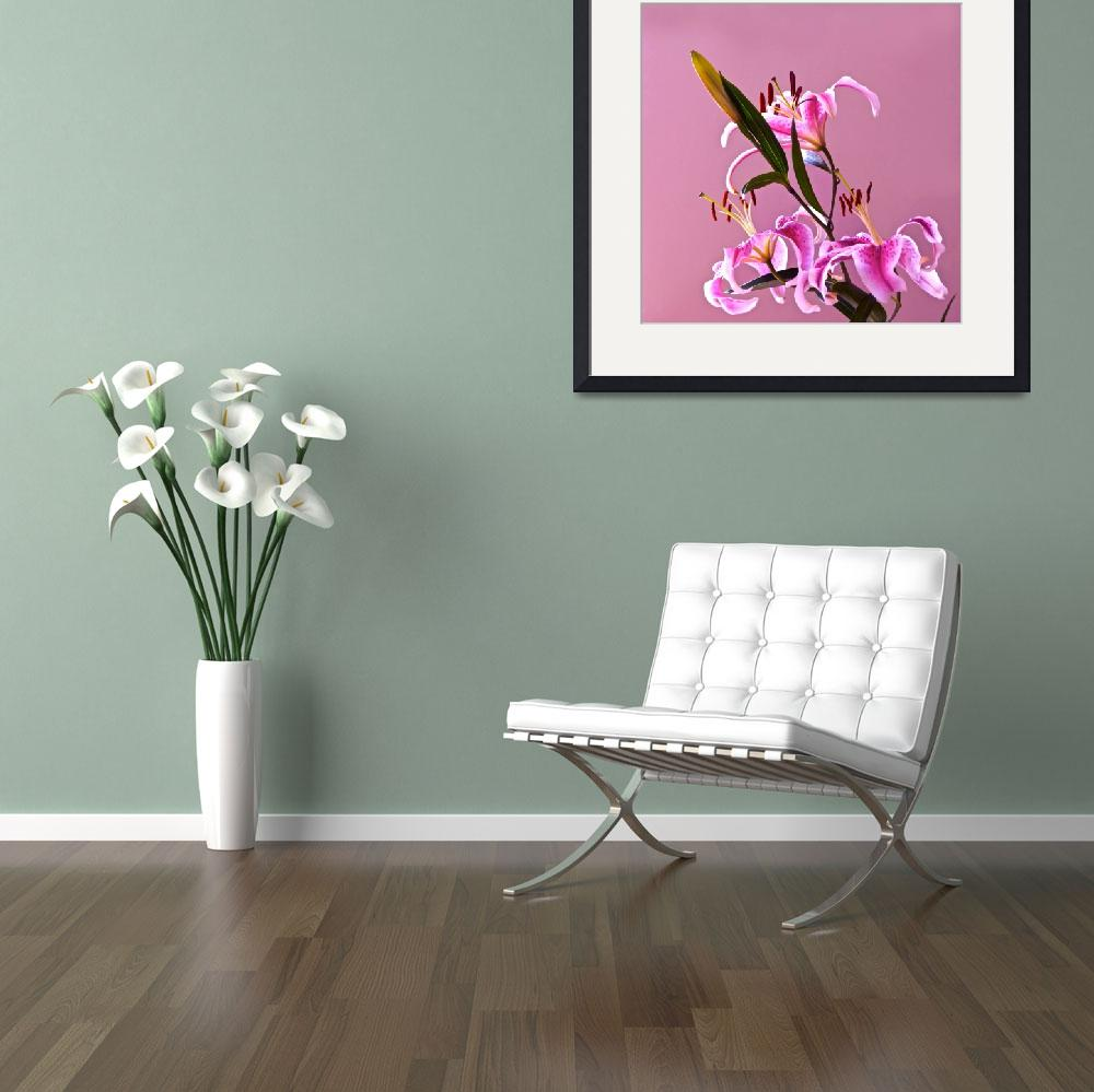 """Stargazer Lilies square frame&quot  (2013) by LightHeart"