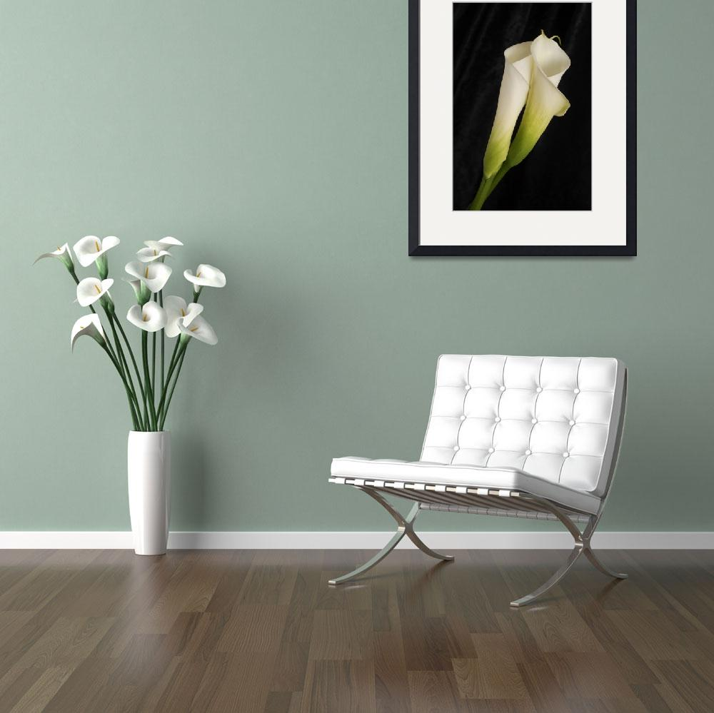 """Calla Lilies Embracing&quot  (2008) by LindaMatlow"