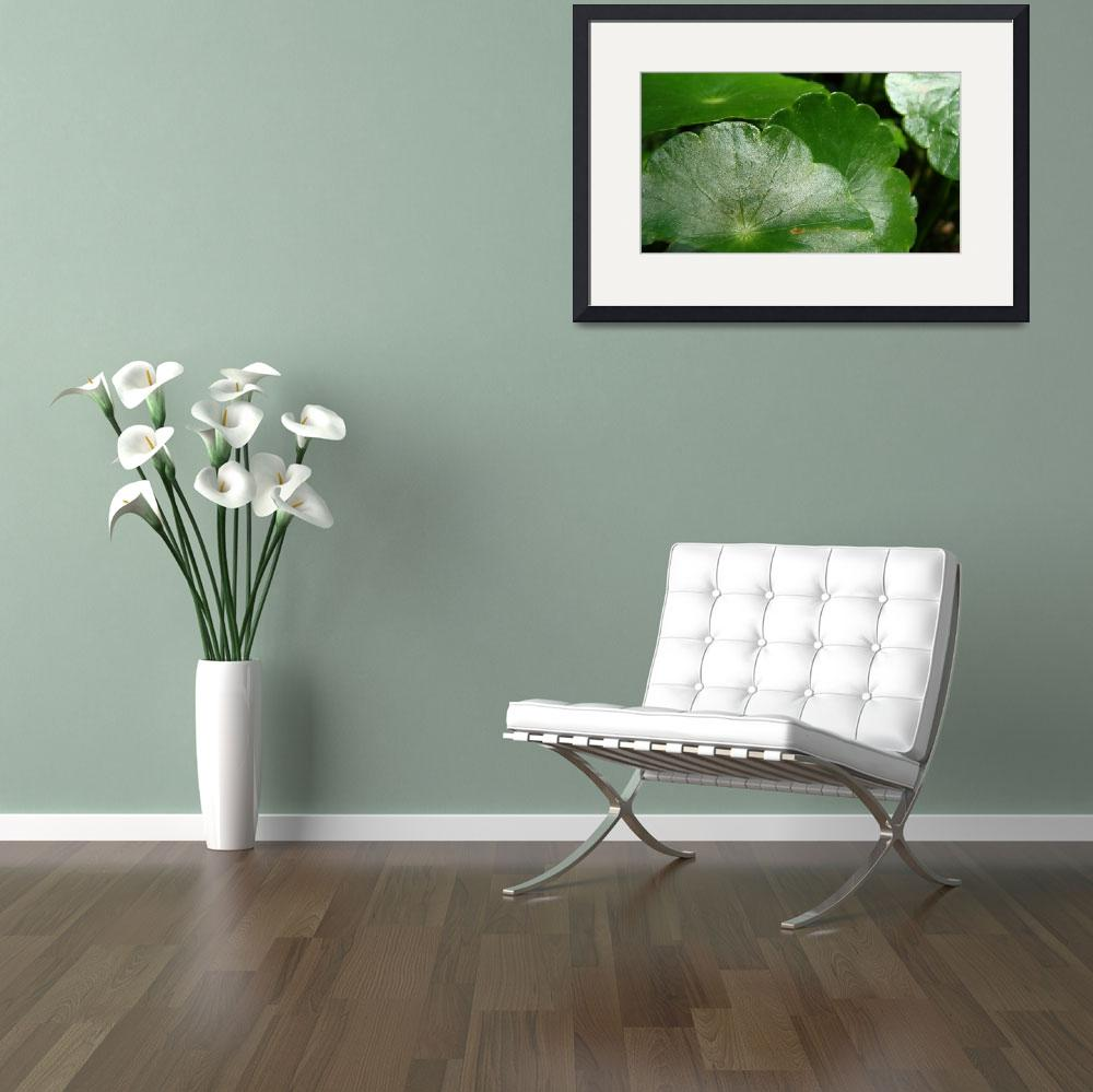 """Lily Pads&quot  (2012) by smsstudiosandphotography"