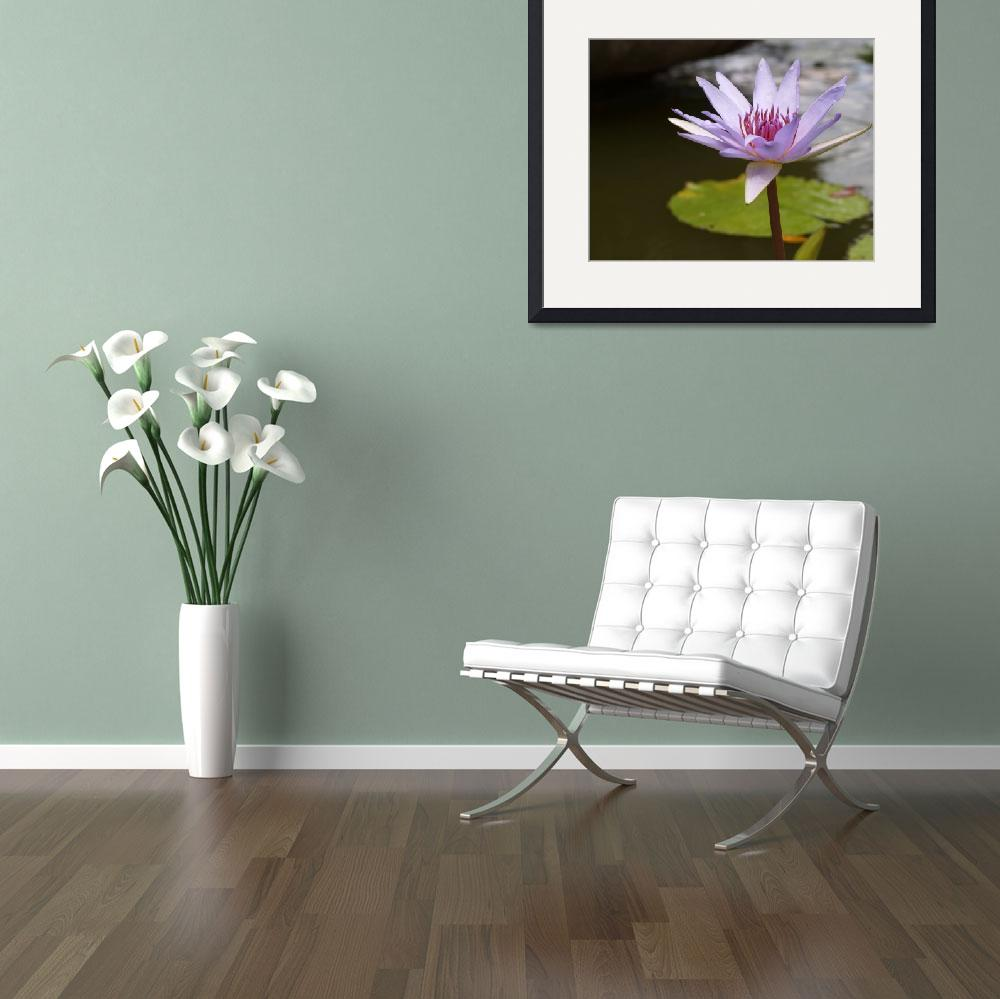 """Water Lily Flower&quot  (2011) by JBrooker"