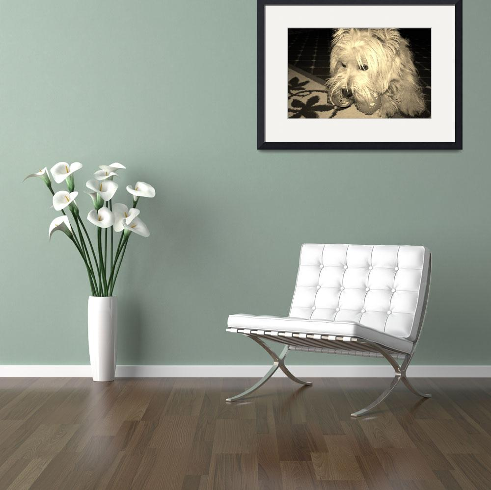 """Playing With Beni - West Highland White Terrier&quot  by artsandi"