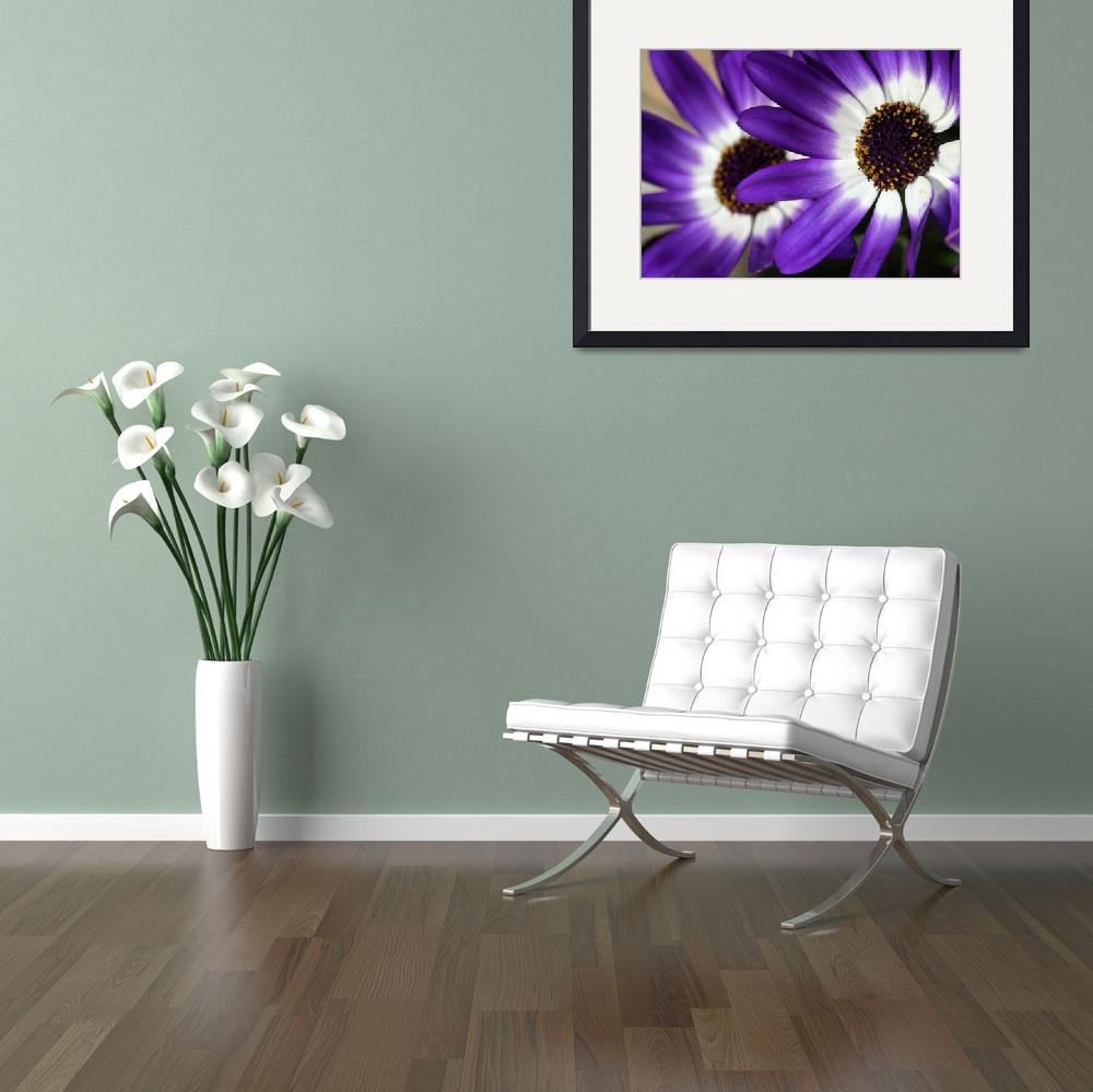 """Purple Daisies&quot  (2011) by PhotographybySabrinaRyan"