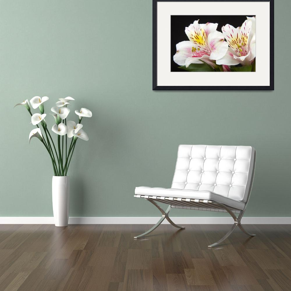 """Peruvian Lilies Colorful Botanical Fine Art Print&quot  (2011) by lightningman"