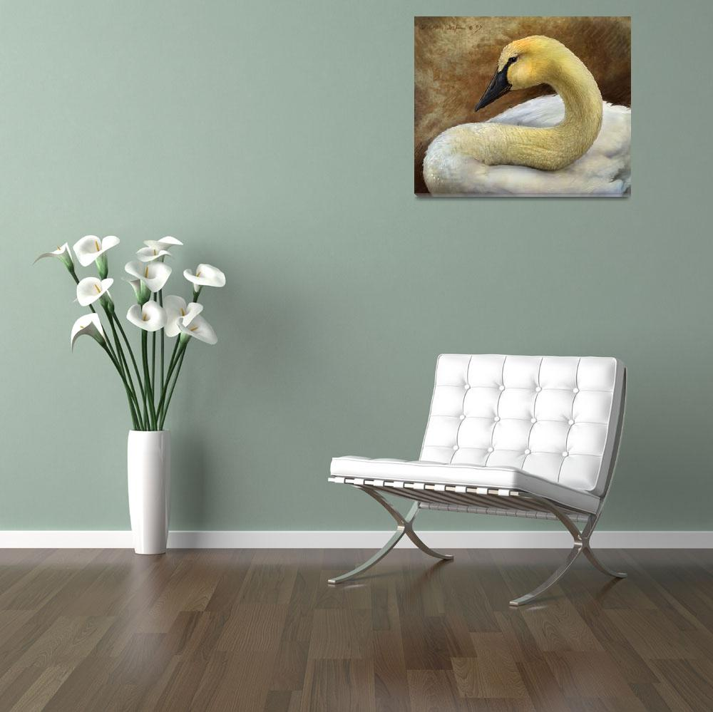 """trumpeter swan smile&quot  (2007) by rchristophervest"
