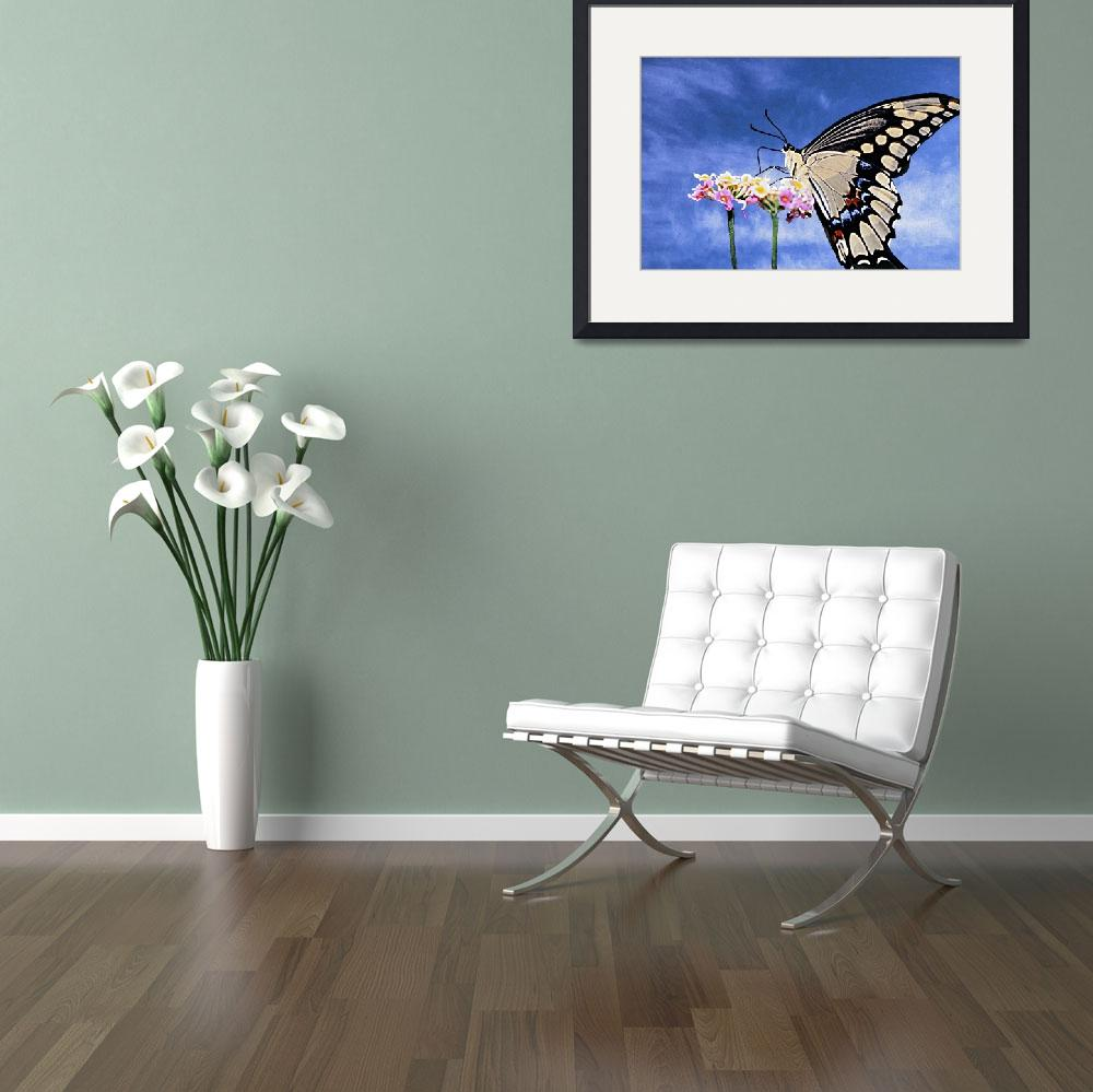 """BLACK Swallowtail Butterfly&quot  (2003) by frankreggio"