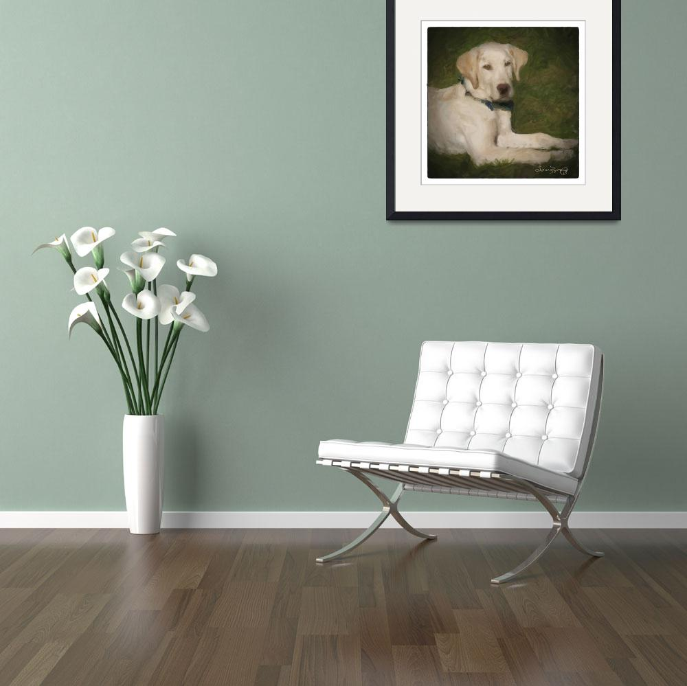 """YELLOW LAB PUPPY&quot  (2012) by shaynaphotography"