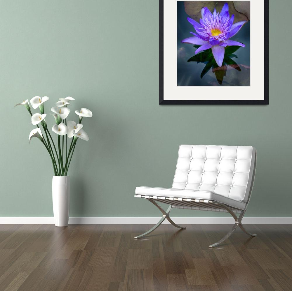 """Glorious Water Lily&quot  (2015) by SoulfulPhotos"