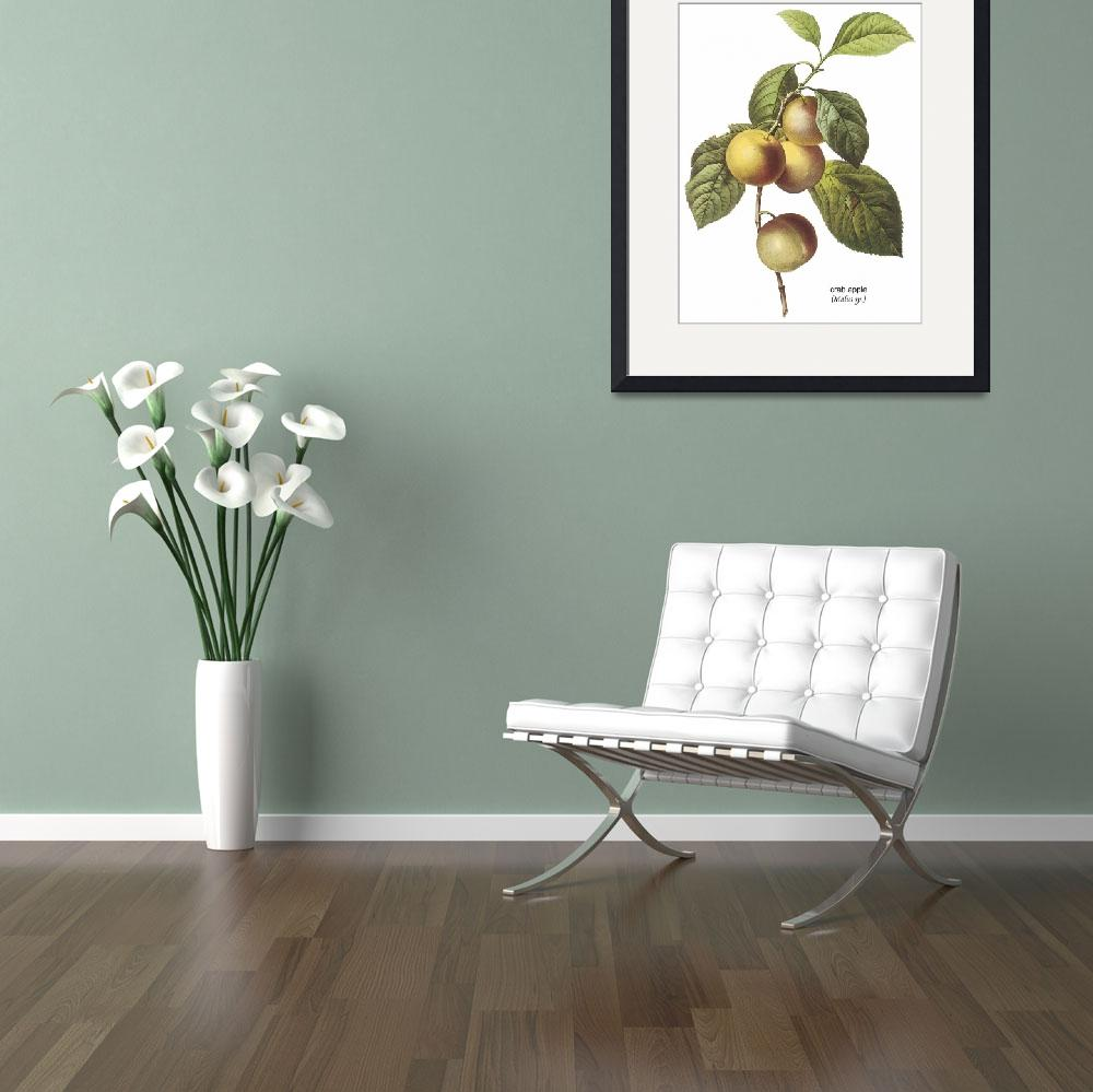 """Crab Apple (Malus sp.) Botanical Art&quot  by ArtLoversOnline"