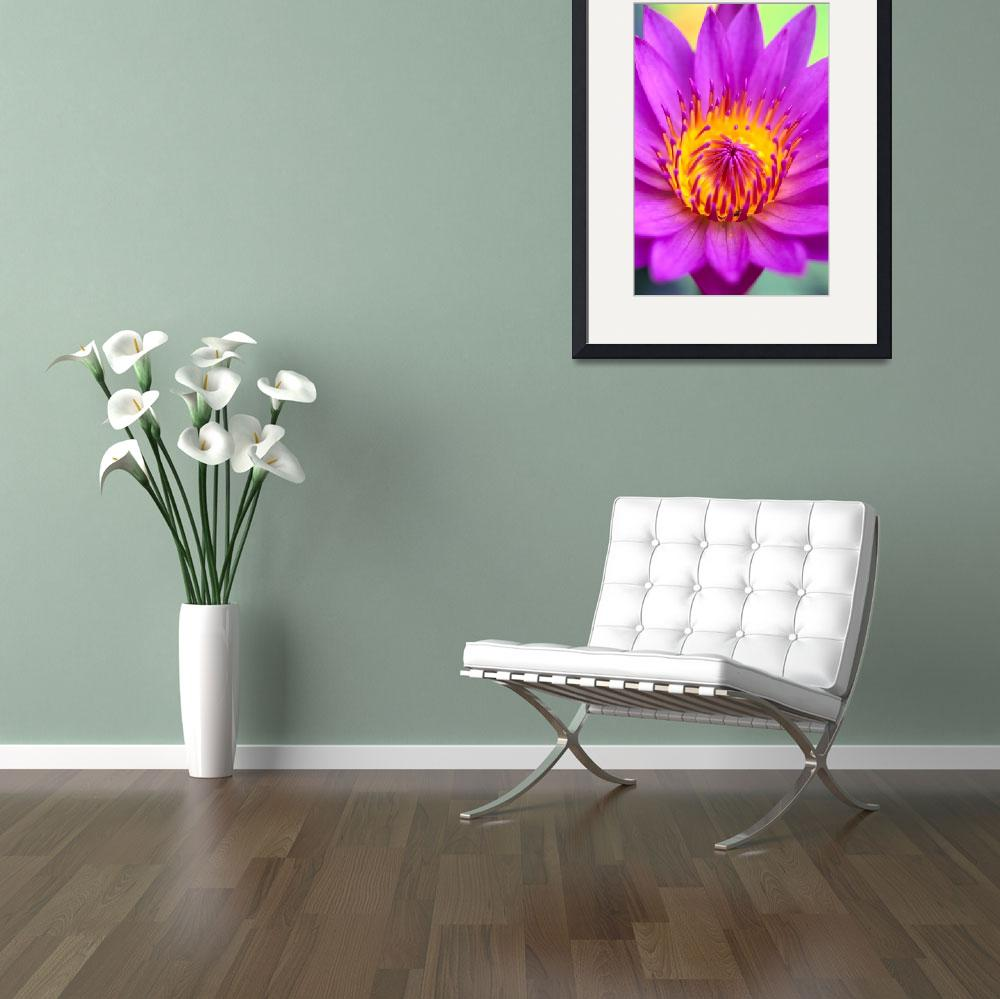 """Pink Water Lily Flower, Yellow Center&quot  by DesignPics"